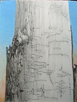 Tree Afterlife 2, Still Standing by Caddisman