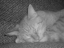 Sleeping Cat Stock 2 by Orangen-Stock