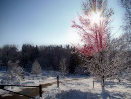 Snow Beautiful 3 by jmarie1210