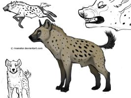 Spotted Hyena by ricenator