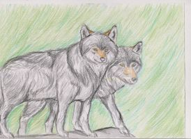 Wolf couple by ArcticIceWolf