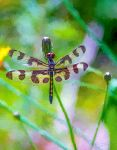 Dragonfly in the Sun by eccoarts