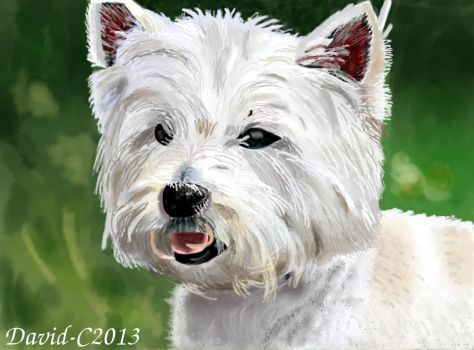 Highland Terrier by David-c2011