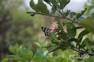 Butterfly and Flower by pfgun0