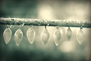 Cocoons by DREAMCA7CHER