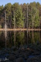 Reflecting Woods by calciumblue