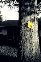 Tie a Yellow Ribbon by Photography3136