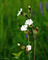 Evening field arrangement by natureguy
