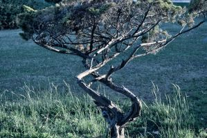 Twisted Branches by ElNaso