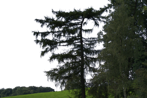 tree 22 png by gd08