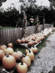 Pumpkin patch by Shannon-K