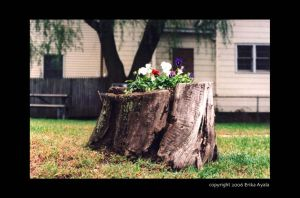 Stump by Sombraluz-Images