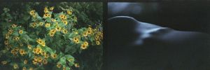 natural diptych II by zosiaq