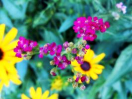 Pink Yellow And Green by Rainbow826