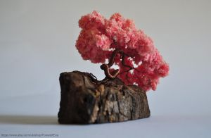 Pink Sakura Bonsai by NoriAnum