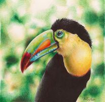 Toucan - Ballpoint pen Drawing by h0wr