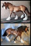 'Golden Boy' Breyer CM Repaint by Starhorse