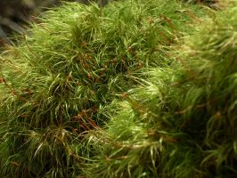 Moss 3. by LiquidityImages