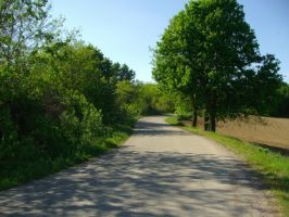 Road in the sunny day 2 by Norhi