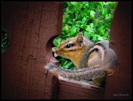 Chipmunk....5 by gintautegitte69