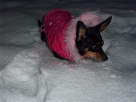 daisy in the snow 01 by Junko-Ishi