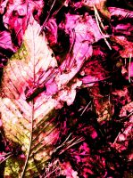 Pink Leaves by AfroDucky