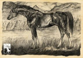 Pencils make the horse grow fonder. by shilohs
