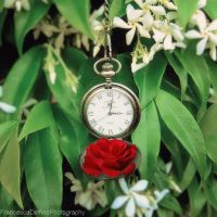 Clock and flowers by FrancescaDelfino