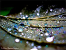 . Water drops I . by KimikoTakeshita