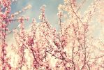 Blossom Breeze by HappyClementine