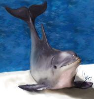 Dolphin by Jagtas