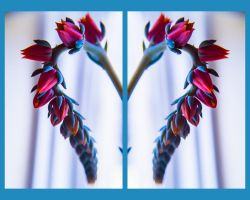 Mirrored Hearts Floral Print Set by charlesheadphotos