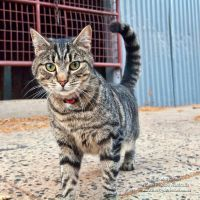 The Stable Cat by FireflyPhotosAust