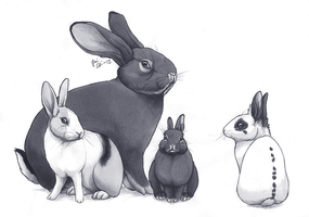 Group of buns by kippurable