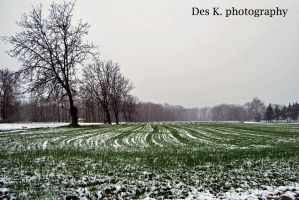 White Day 1 by 4DK