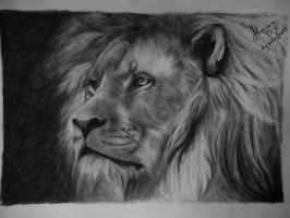 Lion by DVMarissa