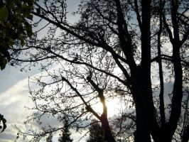 winter branches pt.2 by twigg21