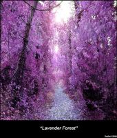 Lavender Forest by Scropitarius