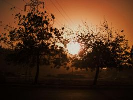 sunset trees by mihi2008
