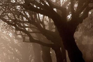 Fog trees by 32tsunami