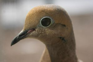 Eye of a Dove by EisenFeuer