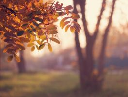 autumn evening_2 by A1ienK