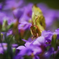 colour of nature by christinegeier