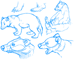 Badgers Study by Plumbeck
