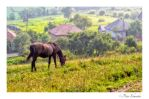 Rural morning by Phototubby