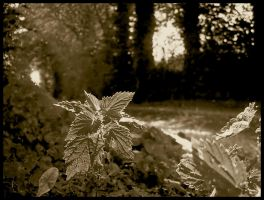 Cabanon - Nettles -Sepia by michelv