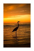 C4D Sunset Heron by cravingfordesign