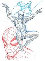 SPIDER-MAN by Wieringo