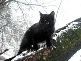 Snowy Little Panther by CherokeeEyes