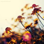 to the sun by Megson